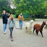 Alpacas Landerijen wandeling zaterdag 29 juni