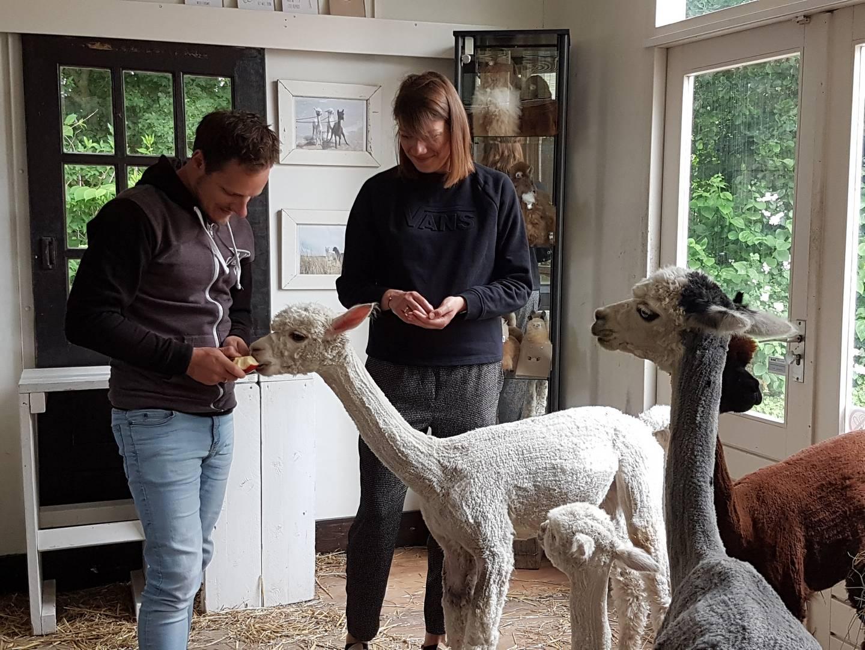 Ochtend Alpacas High Tea op zaterdag 27 juni 2020
