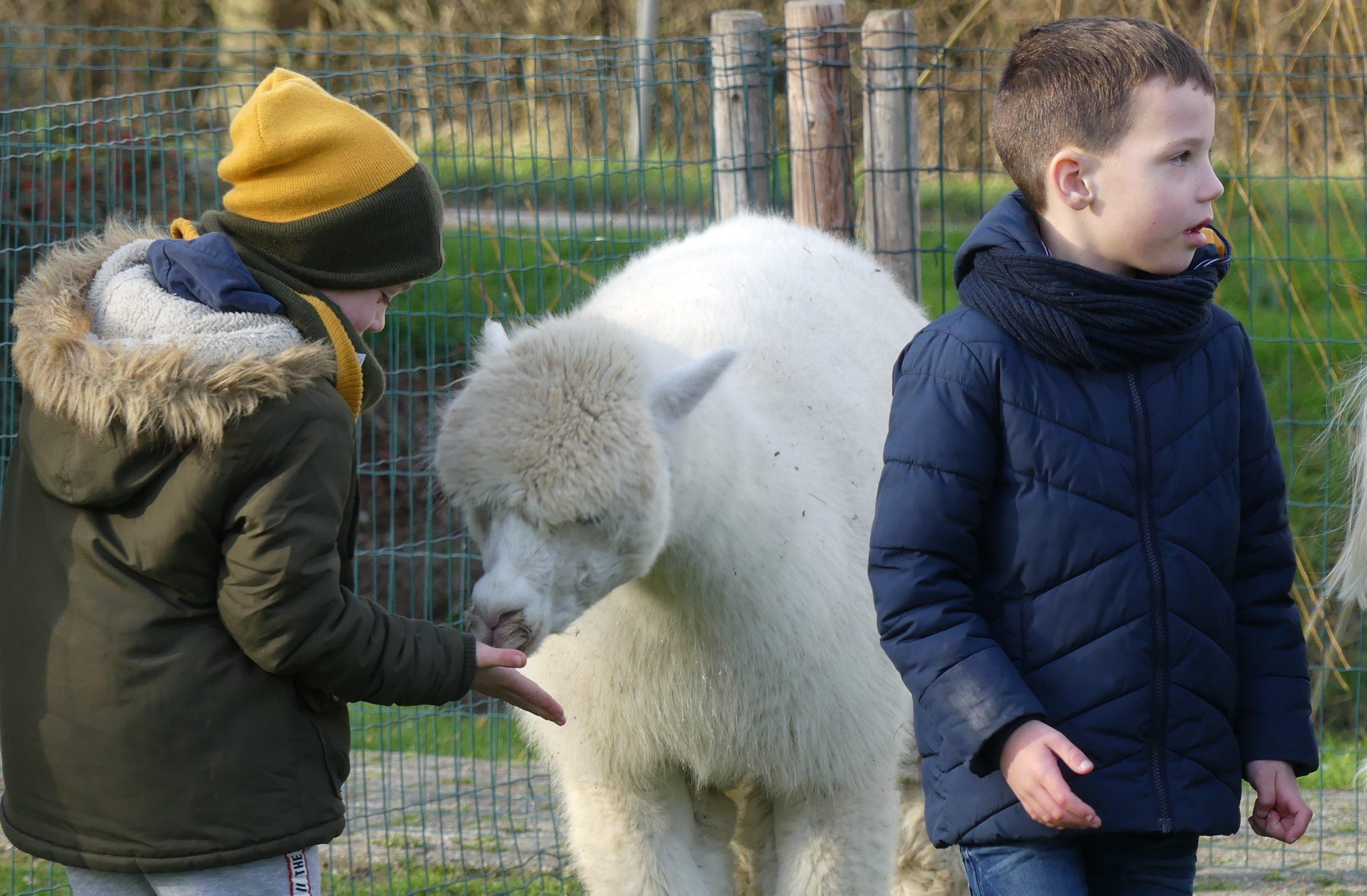 kinderfeestje Jonge Knuffel alpaca