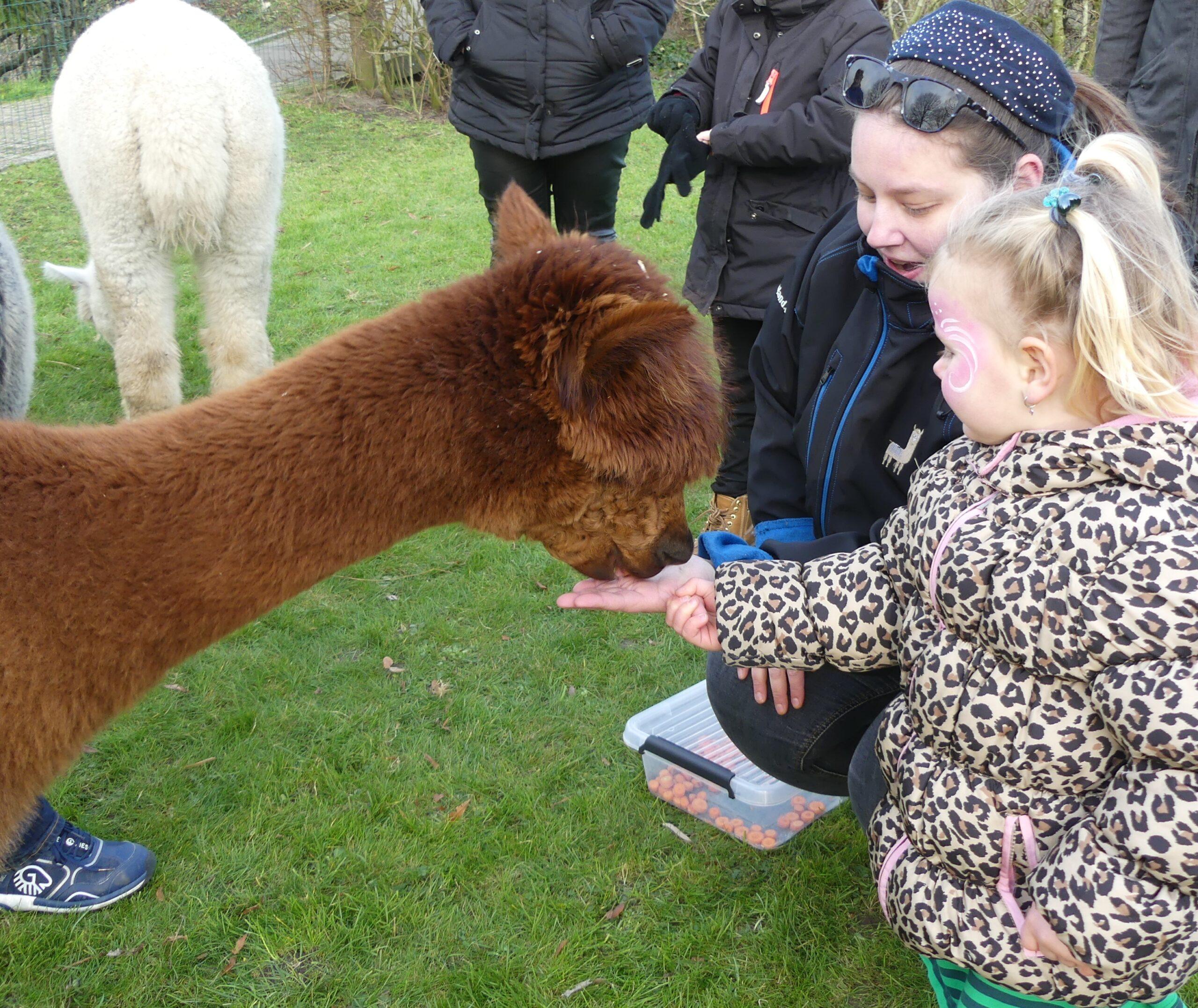 Kinderdag met Alpaca's woensdag 27 oktober van 12.00 tot 15.00 uur
